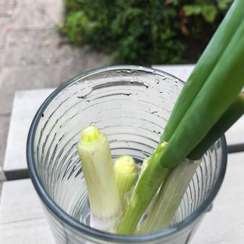 Groente opnieuw kweken