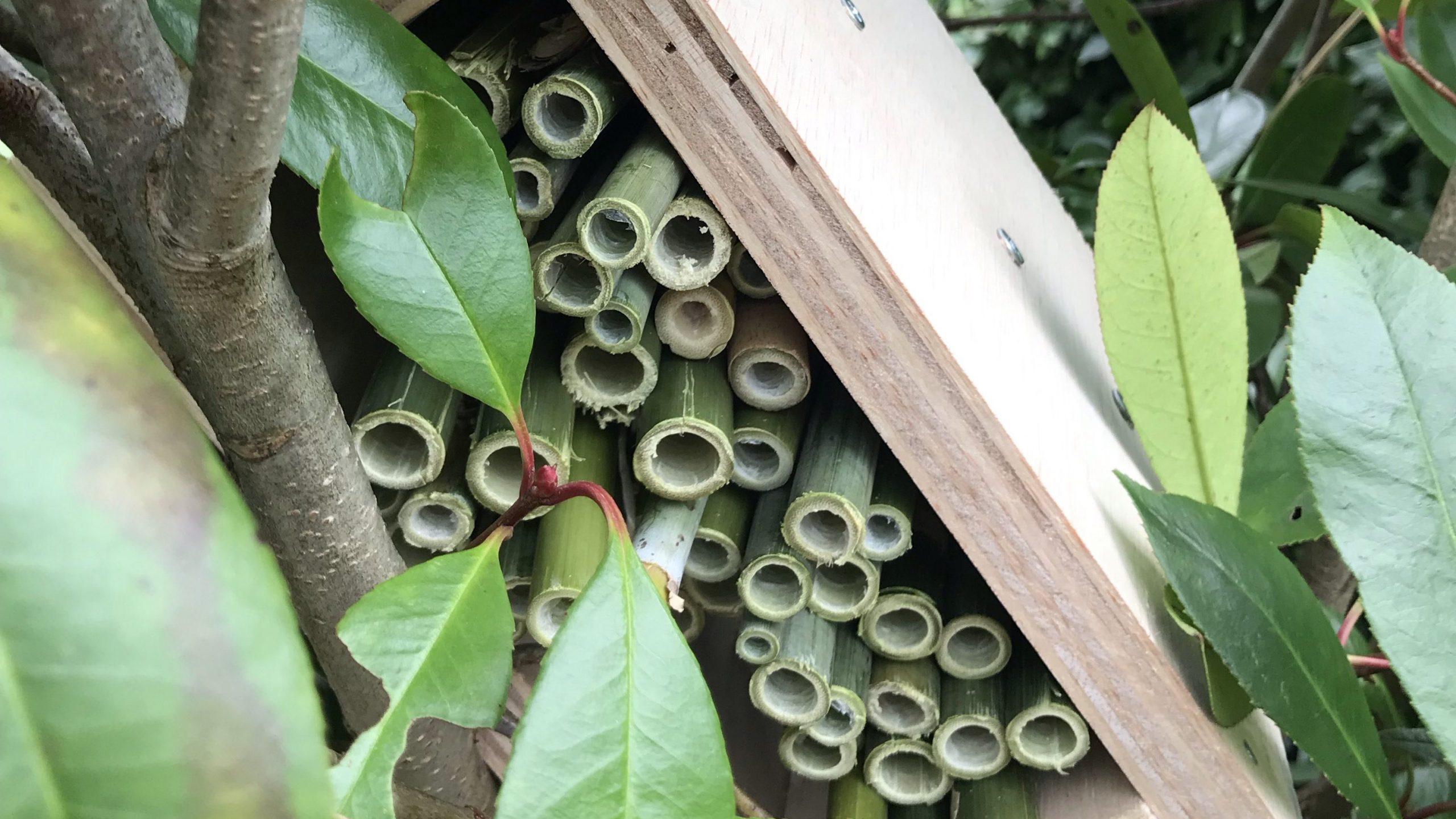Insectenhuis plaatsen