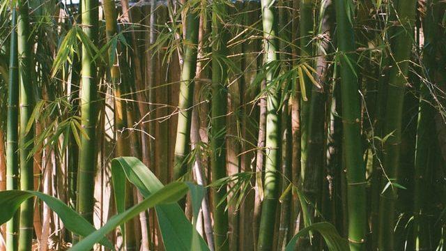 Bamboe gebruiken